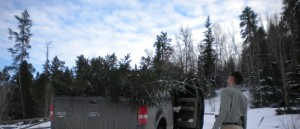 Getting a Christmas tree, Black Hills of South Dakota.