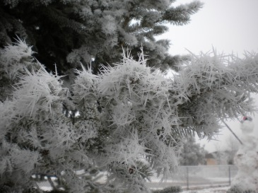Frost Spikes 3