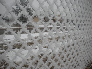 Frosted Fence 2