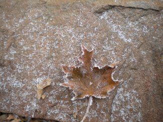A frozen leaf on our back patio, Rapid City, South Dakota.