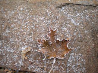 A frozen leaf on our back patio, Rapid City, South Dakota.