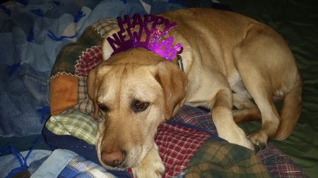 Are your New Year's resolutions leaving you dog tired?