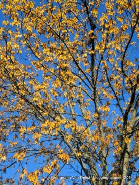 Rusty golden leaves against a bright blue sky.