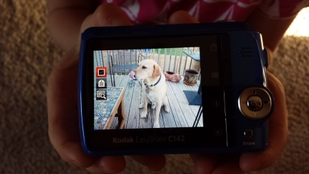 A photo of Ross the Dog, taken by my daughter on her digital camera.