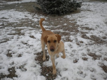 Ross playing in the snow, South Dakota.
