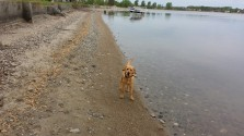 Our new family member, Theodore Baker, enjoying the beach as Lake Kampeska, in Watertown, South Dakota.
